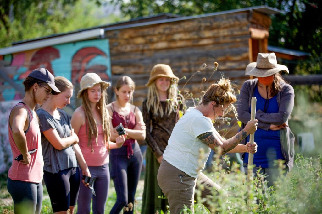 Wild Skills: Nature's Farmacy & Herbal First Aid Workshop 6/17-21