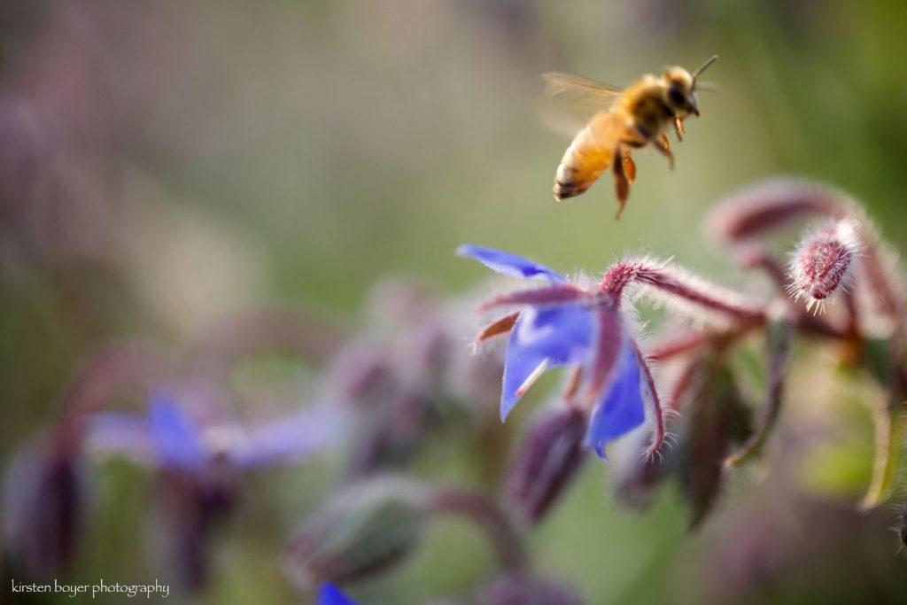 Sacred Bee Medicine Weekend 8/27-29
